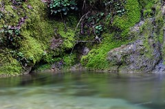 flow (SS) Tags: longexposure italy plant green nature moss pentax lazio k5 monteguadagnolo smcpentaxda1855mmf3556alwr ss