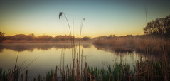 Pennington Flash (jasonhudson2) Tags: sky mist water reeds dawn serene tranquil pennington