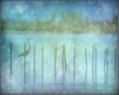 Great Blue Heron (Kindred Souls) Tags: ocean camera flowers blue trees sunset blackandwhite white lake fish green bird texture heron water leaves pinetree sunrise fence lens grey fly wings fishing pond eyes downywoodpecker stream exposure nest eagle cove wildlife bears border hunting baldeagle beak feathers bluewater turtles raptor shore frame frogs eggs birch trout predator sunlightonwater twigs seabass bushes egret shrubs greatblueheron moonbeam claws osprey snowyegret refuge seafence wildliferefuge nationalwildliferefuge zoomlens talons wildanimals shorebirds wildroses brackish eaglets thegalaxy wowl1