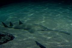 valencia 2016-106 (hiroke636) Tags: valencia mar peces oceano oceanografic