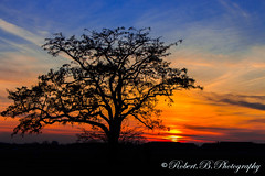 Der Baum im Licht (Robert.B. Photography) Tags: blue sunset red orange plant tree berlin rot nature landscape outdoors evening abend twilight sonnenuntergang outdoor natur pflanze himmel wolken colored dmmerung blau landschaft baum farbig cloudysky drausen