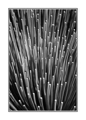 Blades (Mono version) (B.M.K. Photography) Tags: plant pattern repetition organic blades grasstree