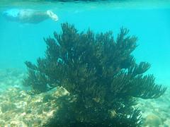 Curaao (Fabrcio Azevedo) Tags: baby beach eagle palm aruba curaao arikok arashi kenepa portmari