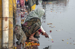 INDIA7725/..Reverance........ (a PSYCHIATRIST'S view) Tags: india photojournalism holy rivers monkeys ganges mathura