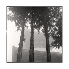 cupola 2  koyasan, kansai  2015 (lem's) Tags: japan fog rolleiflex forest temple koyasan cupola kansai foret japon brouillard planar coupole