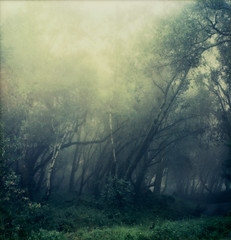 rain (lawatt) Tags: trees mist film rain forest bay instant slr680 gen2 theimpossibleproject color600 roidweek2016