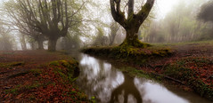 Reflejos (Alfredo.Ruiz) Tags: tree green grass leaves fog forest river spain foggy beech moos