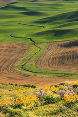 The Palouse (Matthew Singer) Tags: washington unitedstates wildflowers garfield palouse steptoebutte