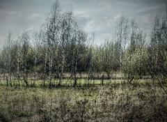 In der Nhe des alten Stellwerks/Rheinhausen (Ke Bra) Tags: nature germany landscape deutschland spring natur nrw duisburg landschaft bume nordrheinwestfalen frhling niederrhein northrhinewestphalia