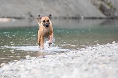Riverdog (brettswift) Tags: dog calgary enzo