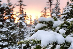 April White (photo fiddler) Tags: sunset snow tree novascotia fir april late natureconservancy 2016 highhead