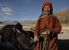 In the high altitude pastures of remote Zanskar, India (magbrinik) Tags: india mountain zanskar remote isolated ladakh reportage sheperd rurallife travelphotography mountaincolors rurallandscape ladakhportrait mountainculture ladakhlandscape travelreportage highaltitudedesert zanskartrekking geographicdiscovery