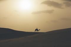 jaisalmer (Karthi KN Raveendiran) Tags: travel sunset india dessert scenic camel lonely jaisalmer incredibleindia karthikn vsco karthiknraveendiran thegreatindianphotodrive