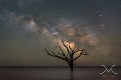 The Dead Forest Milky Way (Mike Ver Sprill - Milky Way Mike) Tags: ocean life new travel portrait sky panorama mist reflection tree art beach sc mike water beautiful night yard forest self way stars dead island photography death bay michael amazing sand nikon long exposure photographer angle outdoor pano south tide explorer low great fine wide salt eerie panoramic best creepy explore driftwood astrophotography plantation midnight jersey carolina astronomy bone serene marsh botany ever magical milky deadwood mv ver based edisto d800 selfie 1424 sprill versprill