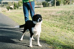 Streamlined (julzdream) Tags: dog 35mm pentax spotmatic