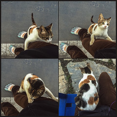 Scaled me like K2 (Melissa Maples) Tags: cameraphone woman selfportrait me apple animal cat turkey square funny asia türkiye kitty 11 melissa climbing antalya maples iphone 土耳其 tetraptych multipanel iphone6 mutipanel