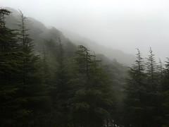 The Cedars of Maasser el Chouf (quaerentia) Tags: winter lebanon forest cedars
