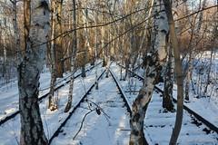 Südgelände 016 (Frank Guschmann) Tags: winter berlin germany deutschland nikon gleise naturpark südgelände d7100 frankguschmann nikond7100