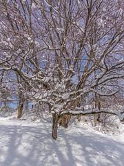 DSC01642-2 (johnjmurphyiii) Tags: winter usa snow yard connecticut shelly cromwell originaljpeg johnjmurphyiii 06416 sonycybershotdsch90