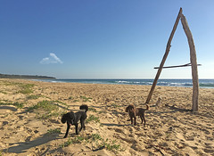 Giant A and Poodles (caralan393) Tags: beach poodles driftwood sculptue a