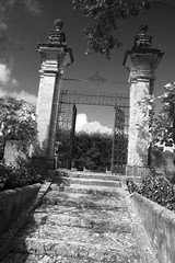 Wrought Iron Garden Gate BW (Don Thoreby) Tags: gardens stairs arch florida miami steps passages walkways walls mansion archways gardengate coconutgrove biscaynebay miamiflorida villavizcaya wroughtirongate gardensteps renaissancearchitecture vizcayamuseumandgardens gardenpathways villavizcaya1914 jamesdeeringmansion