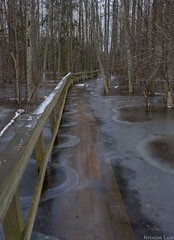 Wet trail of Ingatsi (BlizzardFoto) Tags: wet nationalpark flood trail soomaa leujutus rahvuspark ingatsi