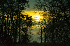 20160116-34_Coombe Country Park_Dusk_Trees Silhoueete (gary.hadden) Tags: trees sunset silhouette dusk calm coombeabbey coombecountrypark coombepark