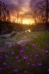 Clear Creek Flowers - Redding, CA (wesome) Tags: redding clearcreek adamattoun