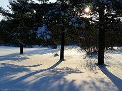 Three Trees Theme (grce) Tags: wood trees winter light sun sunlight snow tree nature forest landscape shadows outdoor samsung alotofsnow treesinsnow samsunggalaxys5