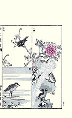 Top left  wintersweet and black bulbul; Bottom left  common snipe; Right  tree peony and silver pheasant (Japanese Flower and Bird Art) Tags: black flower tree bird art japan silver japanese book pheasant picture peony common woodblock ginko chimonanthus nihonga adachi bulbul wintersweet paeonia leucocephalus snipe phasianidae calycanthaceae gallinago paeoniaceae scolopacidae praecox suffruticosa pycnonotidae lophura nycthemera hypsipetes readercollection