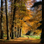 "Herfst <a style=""margin-left:10px; font-size:0.8em;"" href=""http://www.flickr.com/photos/62259267@N04/24701443172/"" target=""_blank"">@flickr</a>"