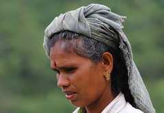 Tea Picker (18) (Explored) (Richard Collier - Wildlife and Travel Photography) Tags: people woman india portraits southernindia teapicker abigfave