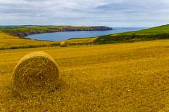 Coloured Ireland (ToDoe) Tags: ireland field yellow coast meer feld irland colored küste goldenyellow goldgelb enhancedcolours verstärktefarben