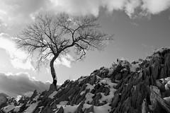 Elorrie (joxelu.) Tags: winter luz montagne canon arbol atardecer landscapes arboles sigma paisaje bn minimal montaa elurra navarra cresta nafarroa arista negua f2845