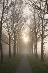 (esmeecadoni) Tags: morning trees winter light sun sunlight mist holland tree nature netherlands fog backlight forest landscape photography woods europe outdoor sony minimal simplicity simple minimalistic drenthe littlethings beautifulearth