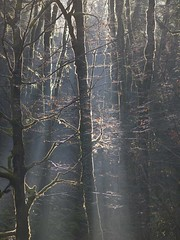 Ecoute ! -*---  (Titole) Tags: trees light sunlight mist leaves vertical moss naturallight thechallengefactory titole perpetualchallenge nicolefaton