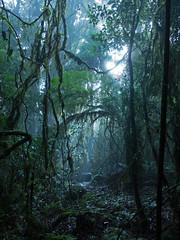 Forest Light (Alternate) (brentflynn76) Tags: trees light mist nature fog forest landscape rainforest scenic atmosphere australia jungle ethereal serene magical springbrook