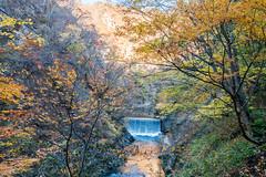 NarukoOnsen-47 (clouddra) Tags: autumn japan jp miyagiken narukogorge narukoonsen sakishi
