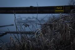 (Ian Threlkeld) Tags: canada nature reflections nikon bc britishcolumbia canadian explore d750 popular ghostly pnw hammond mapleridge fraserriver irt nikonphotos beautifulbc nikonphotography ridgemeadows hellobc explorebc mynikonlife porthammond destinationbc