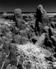 Port Victoria (polyglot) Tags: 120 beach filmscan rz67 xtol r72 jobo portvictoria ir820 12073101jpg