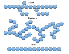 Starch Glycogen and Fiber (nutritionaldoublethink) Tags: carbohydrates complex starch glycogen fiber