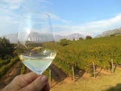 Uva Mira Chardonnay (RobW_) Tags: southafrica march saturday vineyards uva mira stellenbosch chardonnay westerncape 2016 05mar2016