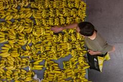 Banana Republic (rogeriobromfman) Tags: brazil yellow brasil fruit shopping market sopaulo banana feira fruta amarelo mercado pinheiros comprando mercadodepinheiros lprepeat