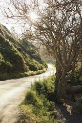 Fairytale Trees (sweet.disposition) Tags: california beach bigsur pfeifferbeach lospadresforest sycamorecanyonrd
