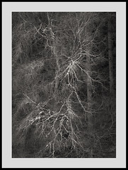 (Gibbom) Tags: park wood tree nature wales forest natural web north lichen spidery