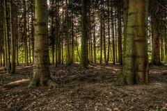 Kralinse bos (Wessel...) Tags: netherlands canon rotterdam nederland bos kralingen kralingseplas