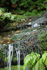 Waterfall Moss (stoelting.chris) Tags: blue mountains waterfall sydney australia cascades nsw