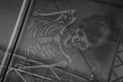 Momia de Chinchorro (Ignacio Blanco) Tags: chile mountains history museum skeleton volcano ancient pueblo bones andes desierto museo geology tradition mummy region range geothermal frontera cultura pacifico origin altura norte cordillera altiplano arica momia momias indgena tectonic parinacota extremo nico chinchorro museodesitio universidaddetarapaca subductionzone aricaparinacota originario xvregion museodesitocolon10 colon10