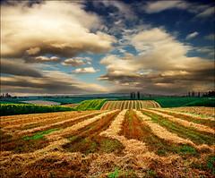 Endless view (Katarina 2353) Tags: landscape summer harvest field photopainting serbiainspired vojvodina katarina2353 katarinastefanovic nikon film exclusive