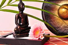 Wellness Gong Buddha (Giy dn tng, Thm tri sn, Sn nh) Tags: pink beauty germany asia stones buddha rosa karte steine health grn braun fitness spa weiss gong handtuch wellness blten bambus hintergrund gesundheit entspannen entspannung dampf gesund indisch asiatisch klangschalen duften orchrideen